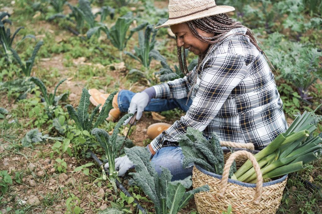 Older black woman farming